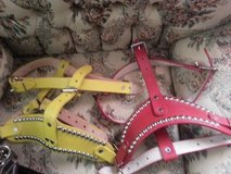 Dog Collars with studs in Alamogordo, New Mexico